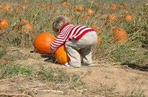 child-picking-pumpkin