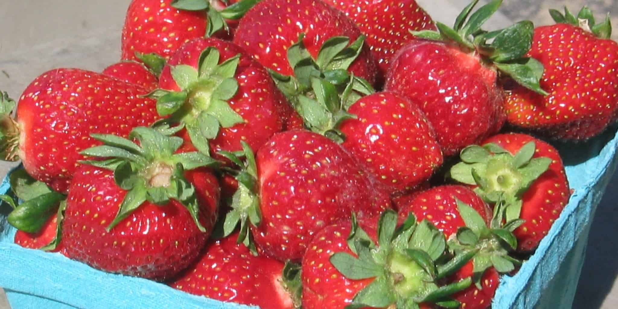 FIRST of the SEASON STRAWBERRIES ARE HERE!!!